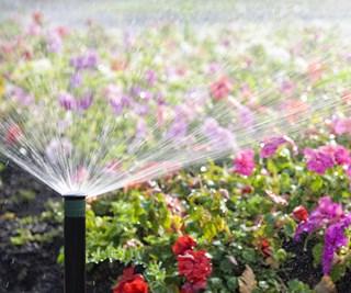 Sunny garden bed with sprinkler